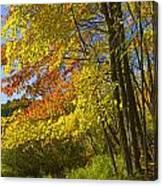 Autumn Forest Scene In West Michigan Canvas Print