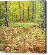 Autumn Forest - White Mountains New Hampshire Canvas Print