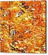 Autumn Fury Canvas Print