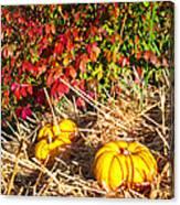 Autumn Garden Canvas Print