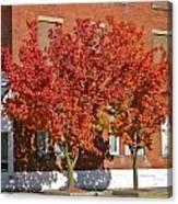Autumn Glory Canvas Print