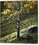Autumn Glow - Yellowstone Canvas Print