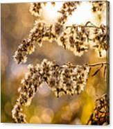 Autumn Goldenrod  Canvas Print
