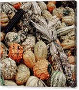 Autumn Gourds 2 Canvas Print