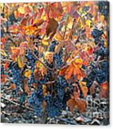 Autumn Grapes Canvas Print