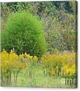 Autumn Grasslands Canvas Print