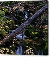 Autumn Greens Canvas Print