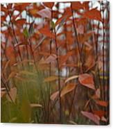 Autumn Harmony 3 Canvas Print