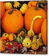 Autumn Harvest 5 Canvas Print