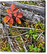 Autumn Highlights Canvas Print