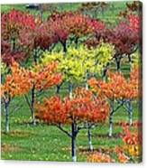 Autumn Hillside Orchard Canvas Print