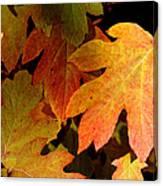 Autumn Hues Canvas Print