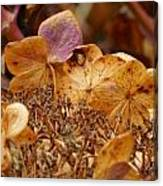 Autumn Hydrangeas V Canvas Print
