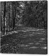 Autumn In Black And White Canvas Print