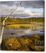 Autumn In Finland Near Inari Canvas Print