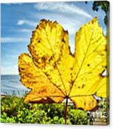 Autumn In Lyme Regis Canvas Print
