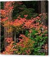 Autumn In Mount Rainier Forest Canvas Print