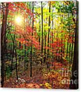 Autumn In South Carolina Canvas Print