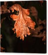 Autumn Is In The Air Canvas Print
