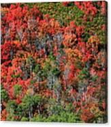 Autumn In The Wasatch Range Canvas Print