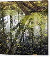 Autumn In Wildwood Park Canvas Print