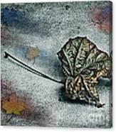 Autumn Is Around The Corner Canvas Print