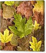 autumn is coming 5 - A carpet of autumn color leaves  Canvas Print