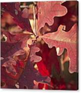 Autumn Is When Every Leaf Is A Flower Canvas Print