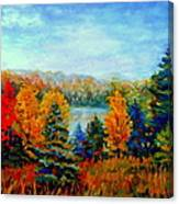 Autumn Landscape Quebec Red Maples And Blue Spruce Trees Canvas Print
