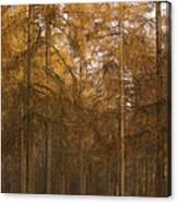 Autumn Larch Canvas Print