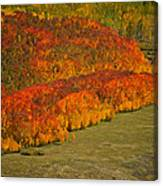 Autumn Lava Flow Canvas Print