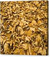 Autumn Leaf Background Canvas Print