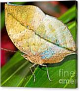 Autumn Leaf Butterfly Canvas Print