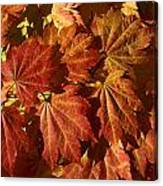Autumn Leaves 00 Canvas Print