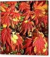 Autumn Leaves 07 Canvas Print