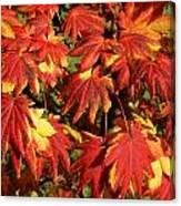 Autumn Leaves 08 Canvas Print