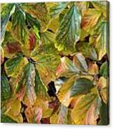 Autumn Leaves 79 Canvas Print