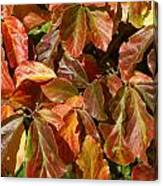 Autumn Leaves 81 Canvas Print