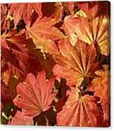 Autumn Leaves 98 Canvas Print