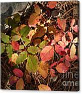 Autumn Leaves And Needles Canvas Print