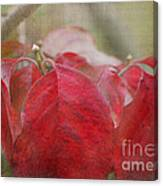 Autumn Leaves Blank Greeting Card Canvas Print