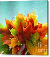 Autumn Leaves Colors Canvas Print