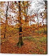 Autumn Leaves Common Wood  Canvas Print