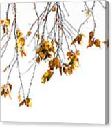 Autumn Leaves Hanging From Branch Canvas Print