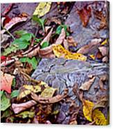 Autumn Leaves In Creek Bed Canvas Print