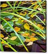 Autumn Leaves In Pond Canvas Print