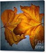 Autumn Leaves On Blue Canvas Print