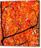 Glorious Autumn Leaves Canvas Print