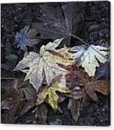 Autumn Leaves Submerged In Pescadero Creek Canvas Print