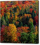 Autumn Leaves Vermont Usa Canvas Print